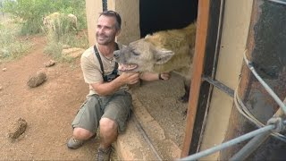 Do Hyenas Laugh?? | The Lion Whisperer