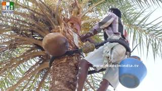 Palm Wine or Toddy Created from the Sap of a Palm Tree