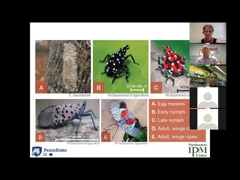 The IPM Toolbox: What You Need to Know about the Spotted Lanternfly