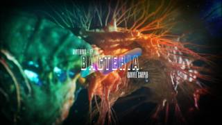 Bacteria - Danyel Carpio