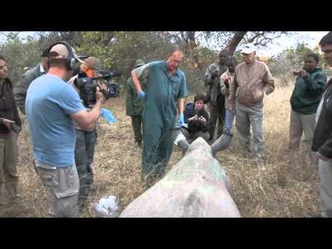 Rhino Revolution – South Africa Travel Channel 24