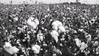 Garfield Akers and Joe Calicott, Cottonfield blues part 1