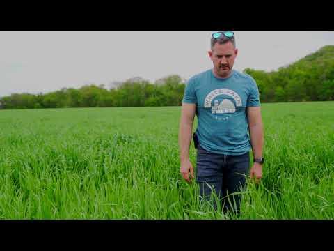 Rejuvenating the Soil: Matt Tentis