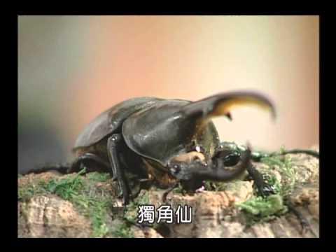 國小_自然_適合人工飼養的昆蟲【翰林出版_四下_第二單元 昆蟲王國】 - YouTube