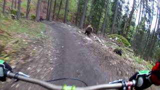 Bear on the Bikepark // SLOW MOTION  // Malino Brdo SLOVAKIA