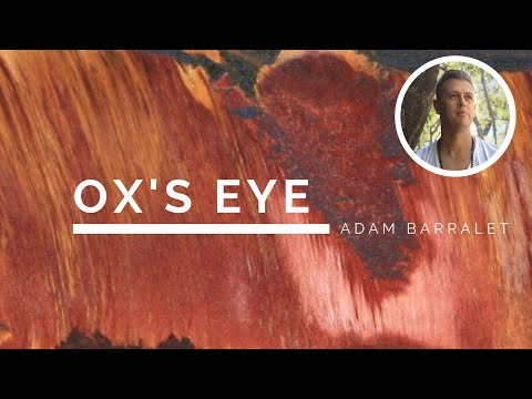 Ox's Eye - The Crystal of Resilient Adaptability