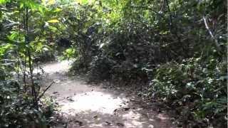 Part 1 - Amazon Rainforest HD video - Jungle's sounds