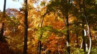 Осень. А. Розенбаум. Вальс бостон