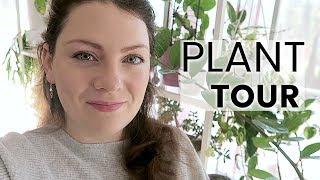PLANT TOUR 2019 - Ma collection complète de plantes d'intérieur | Plantes vertes et orchidées