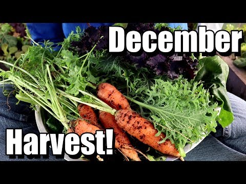 December Vegetable Garden Harvest (and 2 recipes!)