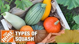Find how to pick the best type of squash for your next meal.