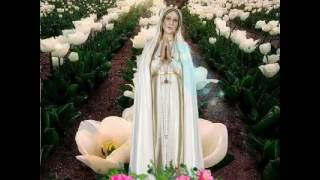 Nossa Senhora de Fátima Rogai por mim