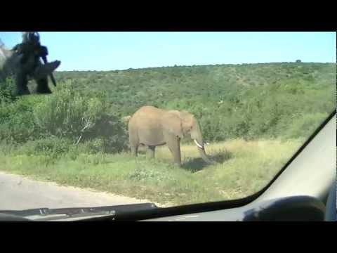 Zuid Afrika 2 – Port Elizabeth – Addo Dung Beetle Farm – Addo Safari