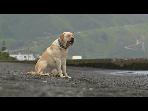 Hero dog Marley saves smaller pooch from drowning at Petone Beach