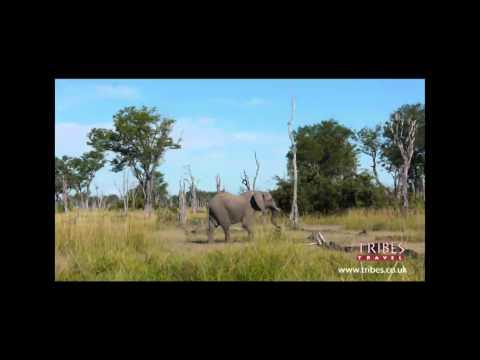 Meeting an elephant on a walking safari