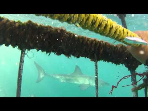 SharkDive HD