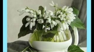 Dupla KáVé - Egy Szál Hóvirág + Dalszöveg