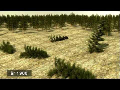Hållbart skogsbruk - den svenska modellen