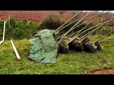 NOVÝ POŘAD Tee(N)ews - Trutnov obnovuje zeleň na bojišti