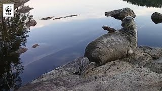 Seal vs Fly | WWF-Australia