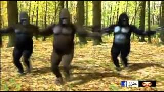 dancing gorillas so funny