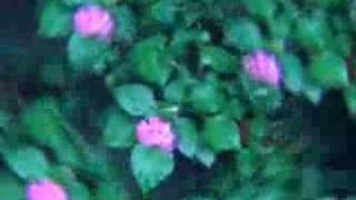 flores de ciudad