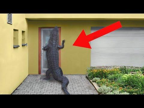 17 Безумных Вторжений Животных, Заснятых На Камеру