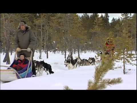 Hundspannssafari i Järvsö