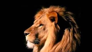 Leão de judá prevaleceu