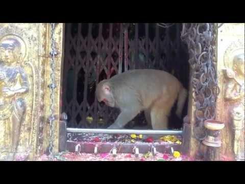 Picnic at Swayambunath (with monkeys), Kathmandu