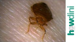 How To Prevent A Bed Bugs Infestation - How To Check For Bed Bugs