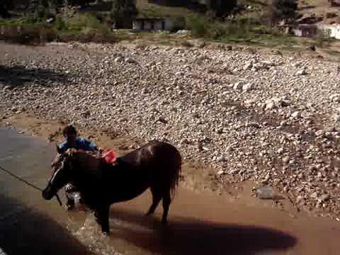 Chevaux lavés dans l'oued à Neknafa en randonnée