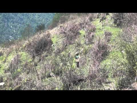Shepard Near on Annapurna Base Camp Trek Yelling at Sheep in Nepal