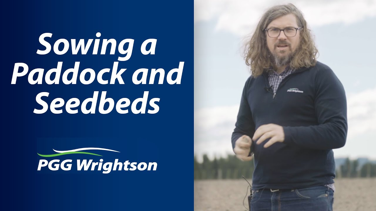 Sowing a Paddock and Seedbeds | PGG Wrightson Tech Tips