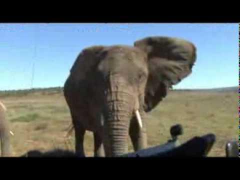 Shamwari Game Drives, Eastern Cape – South Africa