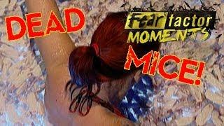 Fear Factor Moments | Tank of Dead Mice