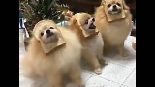 I am the one [Dogs with bread :v]
