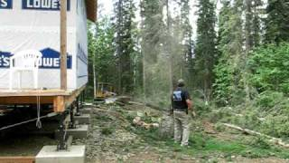 Mike Benson Pushes over a Spruce with the Dozer in Fairbanks Alaska