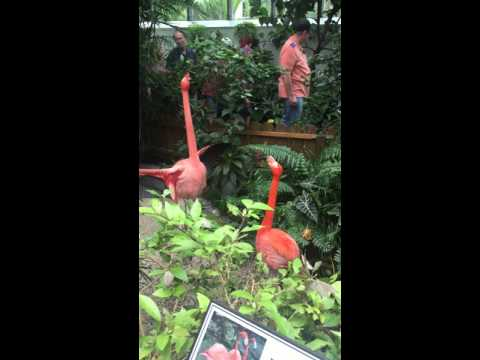 Flamingos at Butterfly Museum with mom and dad end of january 2016