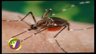 TVJ Midday News: King Street Tax Office Evacuated   Dengue Cases on the Rise - November 5 2019