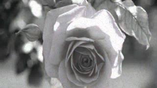 Zé Ramalho   Manga Rosa