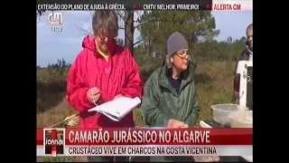 Algarve tem espécie de camarão única