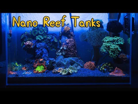Nano Reef Q&A With Dave Fason of NanoBox Reef