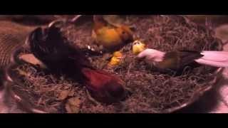 Cisco Adler - Hypnotize ft. Matisyahu (Official Video)