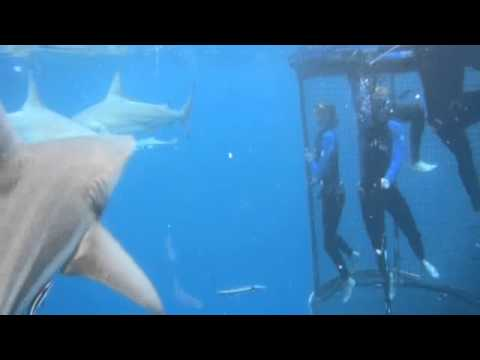 Shark Cage Diving  South Africa – KZN