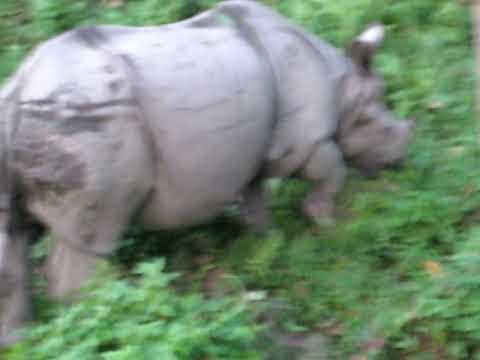 Rhinos of Nepal
