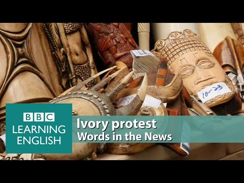 Ivory protest. Learn: ornaments, confiscated, illegal, slaughtered, crushed