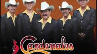Los Cardenales de Nuevo Leon- Mi Complice