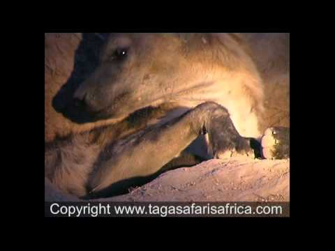 African Safaris to Leadwood Game Reserve