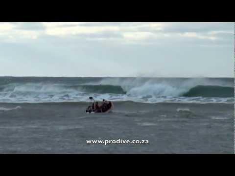 Sardine Run Launch, Port St Johns South Africa